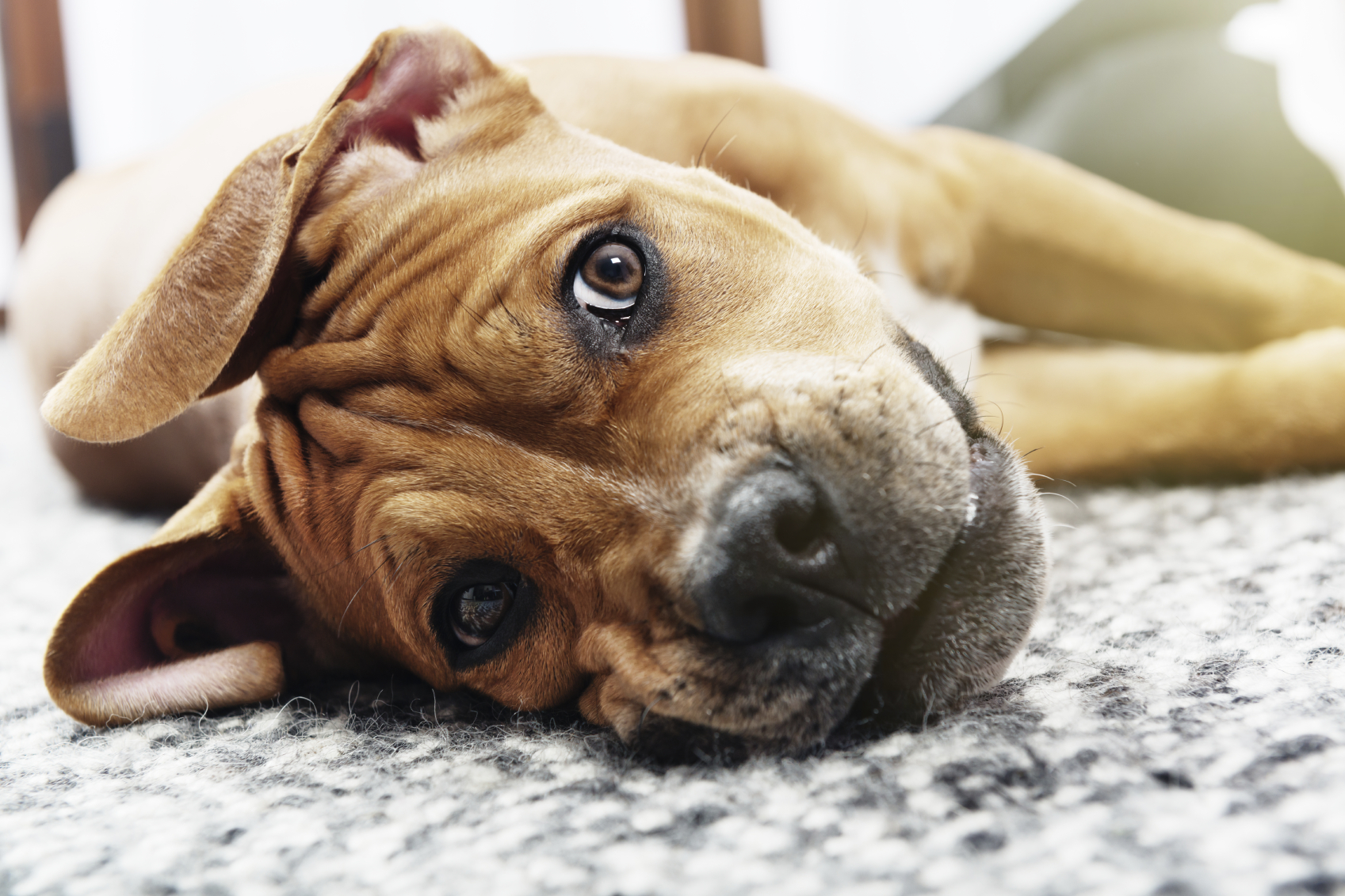 Safety Tips for Pet Day in the Office