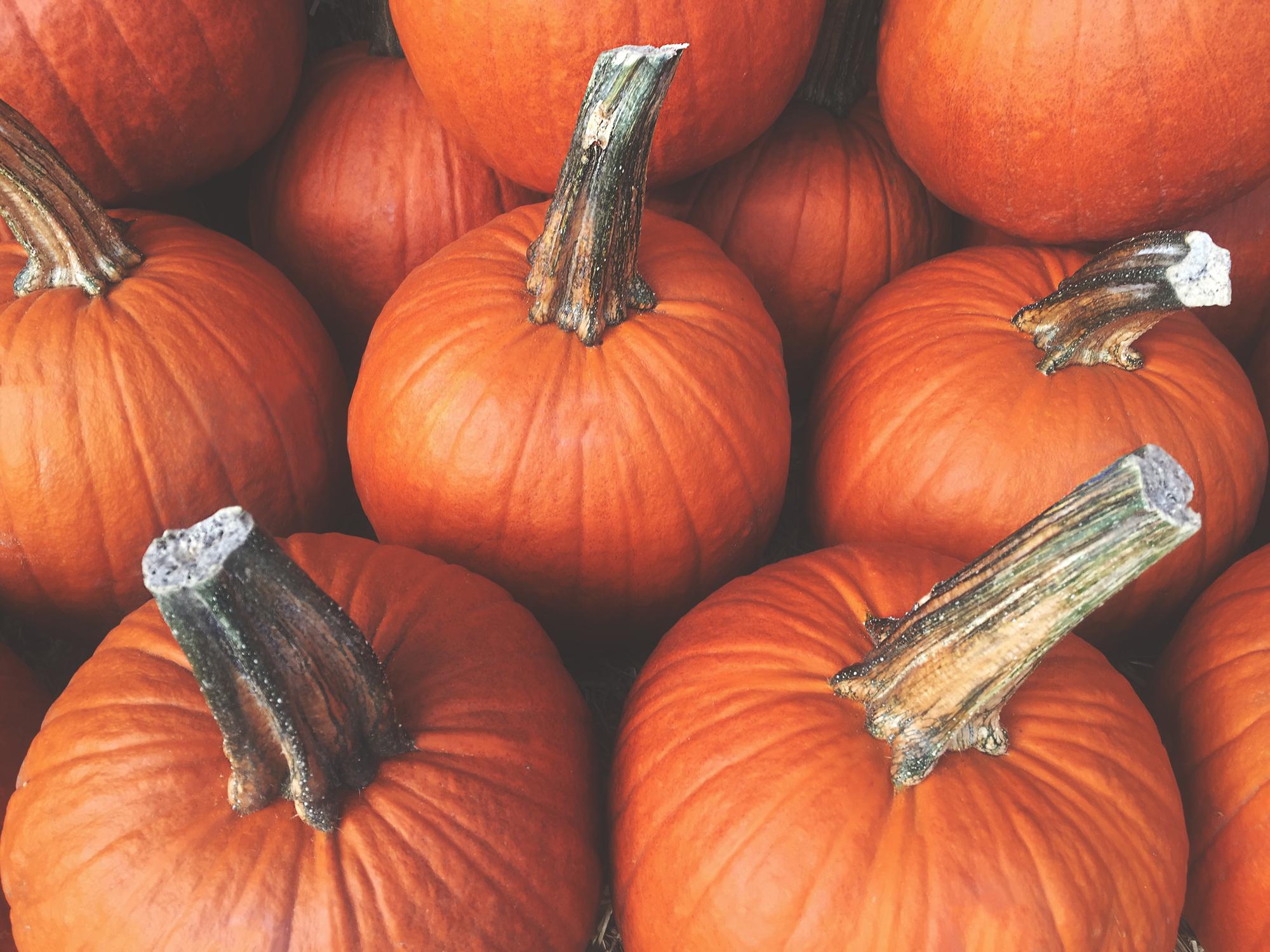 pumpkins in class